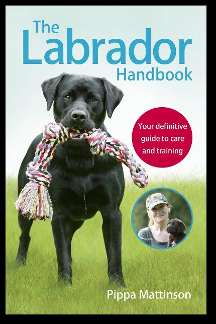 Labrador Puppies | The Labrador Forum